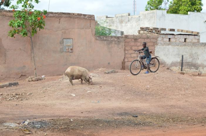 Tambacounda bambino e maiale